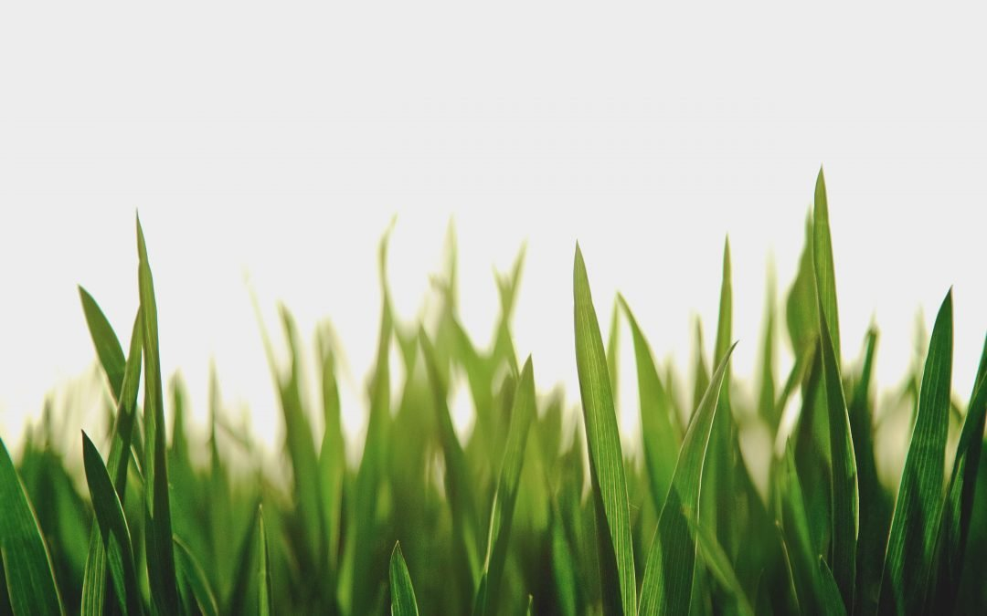 Patience Could Create the Green Pasture you are Looking for